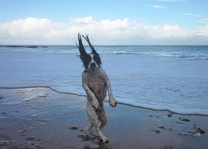 30 дивних і кумедних пляжних фотографій (Частина 2) - фото 20