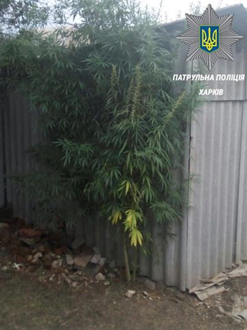 Харківські копи знайшли у будинку з неврівноваженими сусідами наркотики - фото 1