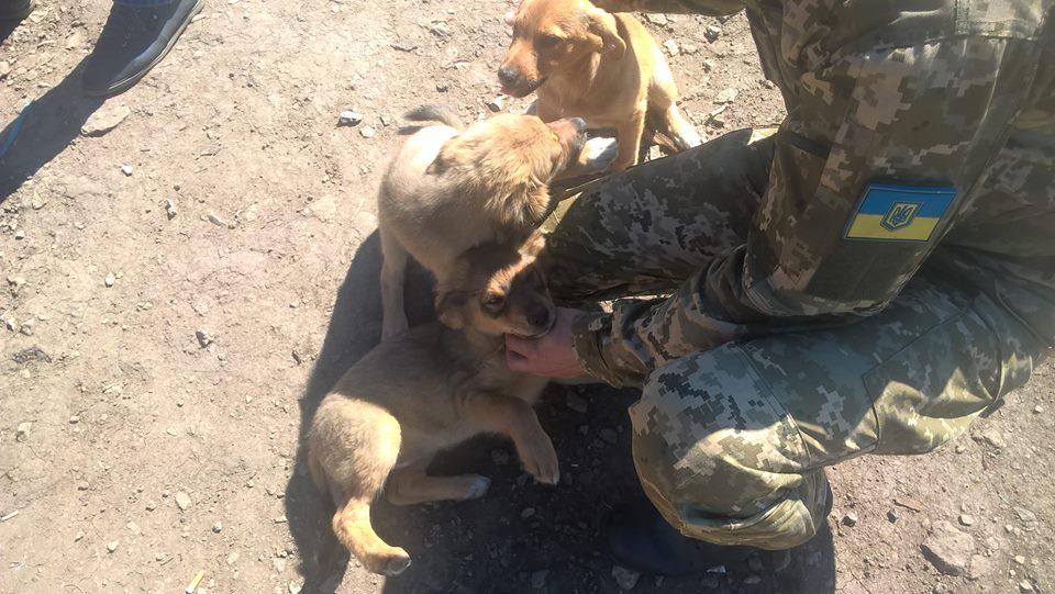 Чим займаються на Донбасі найкращі друзі бійців АТО - 7 - фото 1