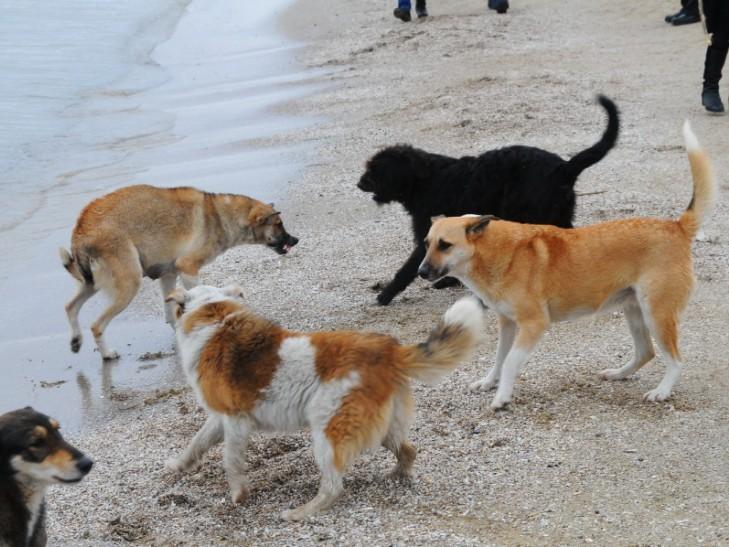 Куди у Миколаєві краще не потикатись, щоб не стати обідом для собак - фото 9