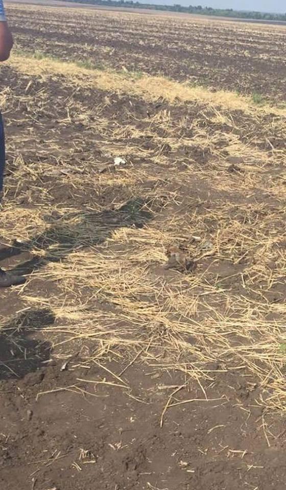 На Миколаївщині серед поля знайшли останки чоловіка, якого переїхала важка техніка - фото 1