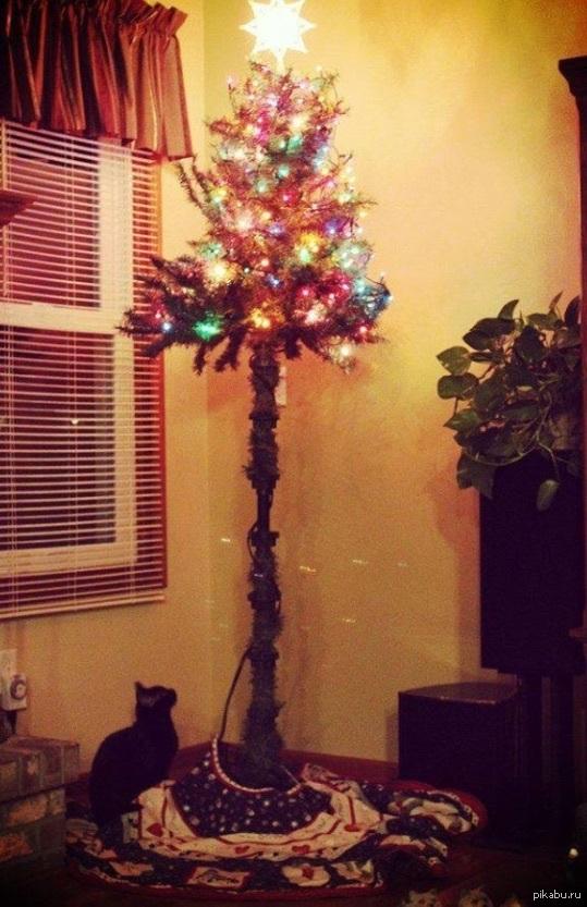 смішне фото кіт і ялинка