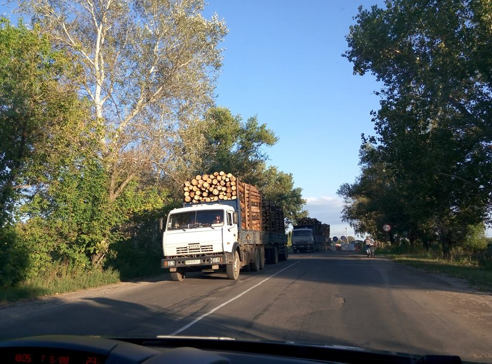 Хто і навіщо вирубує ліси Луганської області та погрожує захисникам довкілля (ФОТО) - фото 3