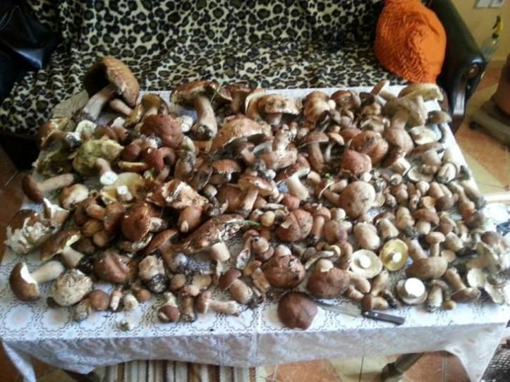 """Закарпатці збирають небувалі """"урожаї"""" грибів - фото 3"""