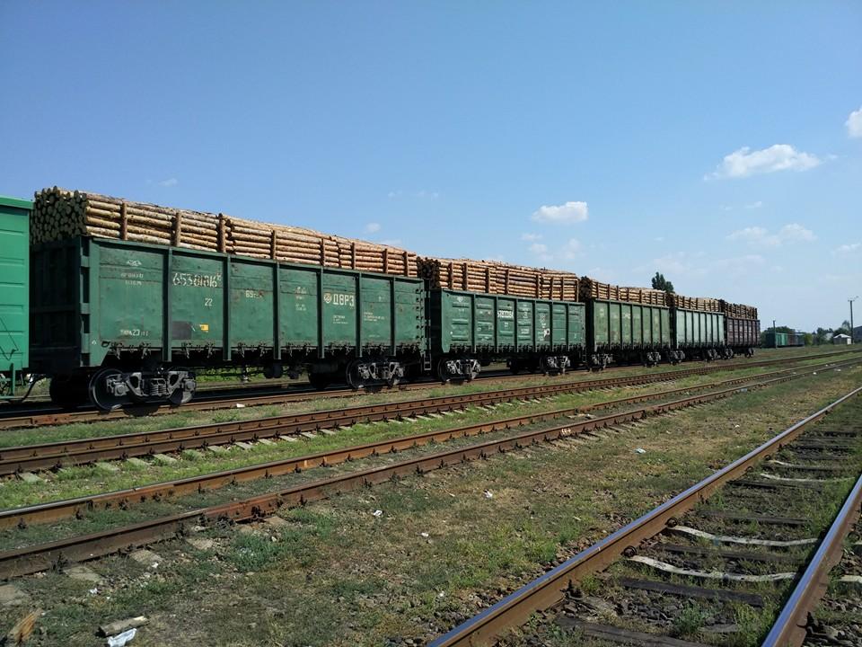 Хто і навіщо вирубує ліси Луганської області та погрожує захисникам довкілля (ФОТО) - фото 1