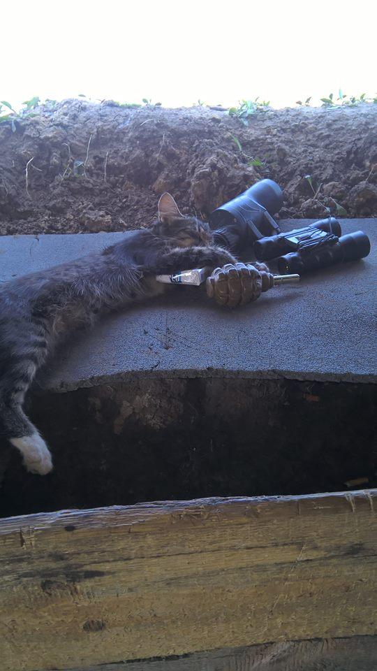 За що котам в АТО треба поставити пам'ятник-8 - фото 9