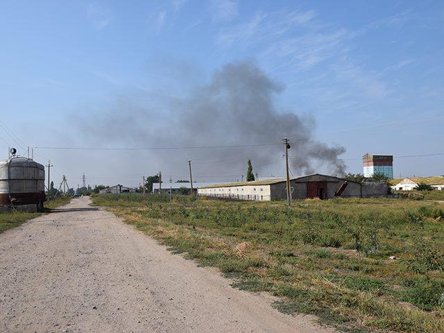 """На Миколаївщині ферму, де мають знищити 7 тисяч свиней через """"африканку"""", відправили на карантин"""