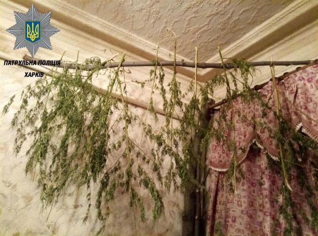 Мешканець Харкова завісив всю квартиру сушеною коноплею - фото 1