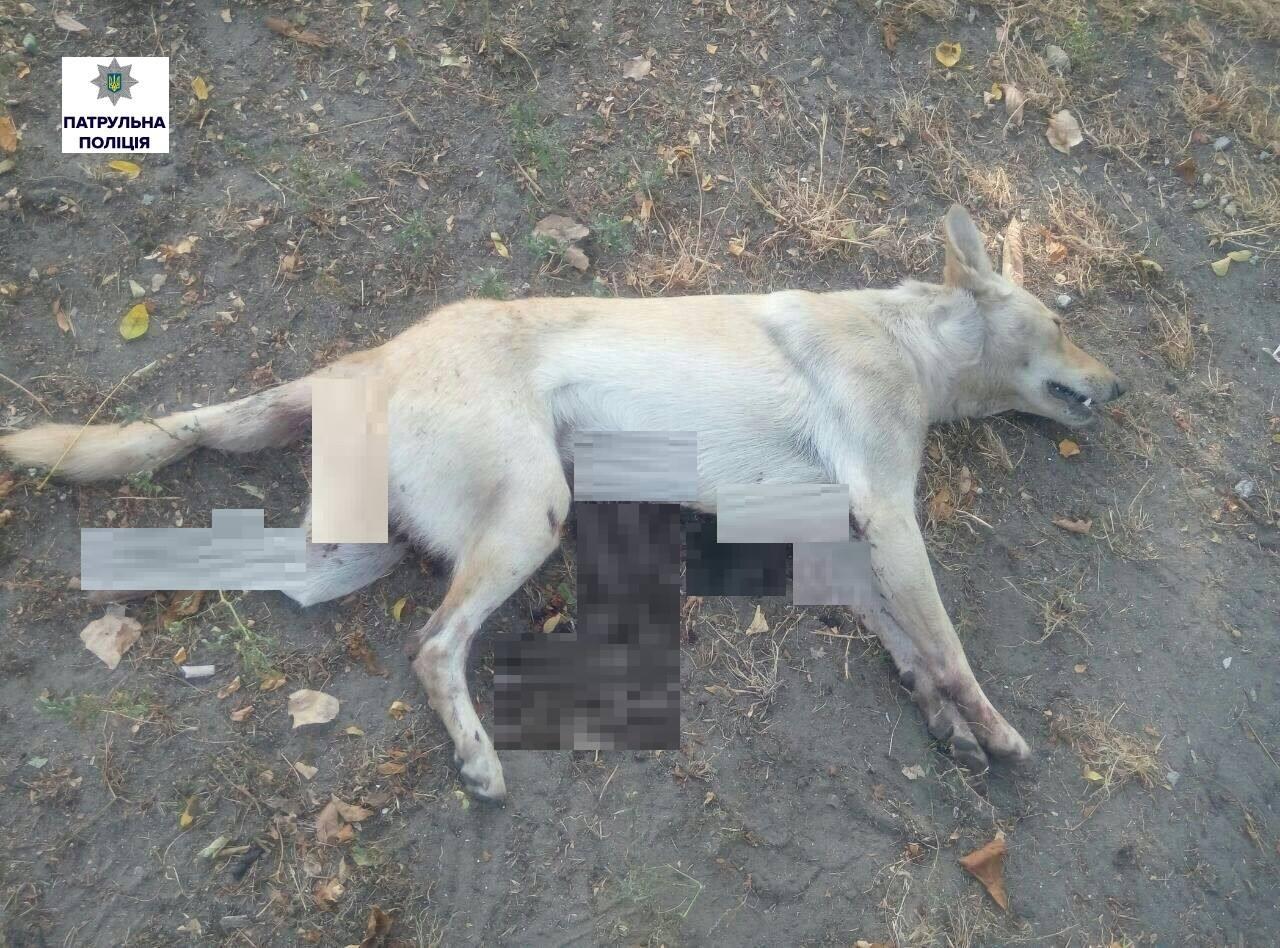 У Миколаєві 44-річний чоловік вбив собаку