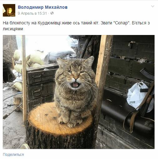 За що котам в АТО треба поставити пам'ятник-8 - фото 7