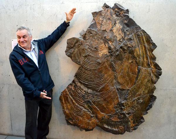 На Миколаївщині в музеї з'явилась раковина величезного молюска віком 70 млн років - фото 3