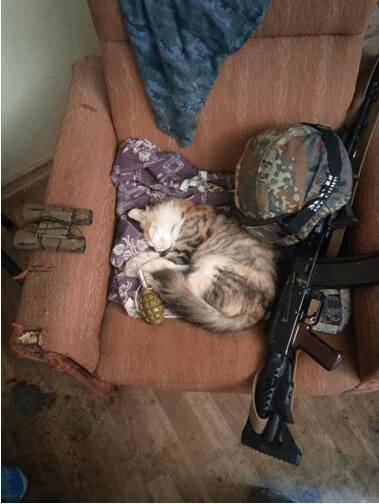 За що котам в АТО треба поставити пам'ятник-8 - фото 4