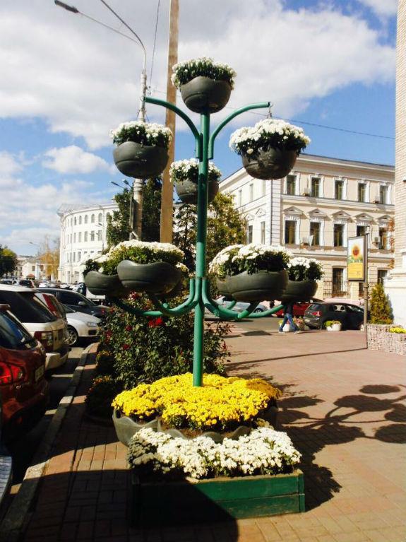 Київ засадять тисячами хризантем - фото 1