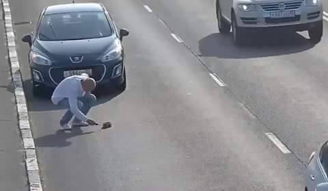Водій, який врятував кошеня на трасі, став героєм в соцмережах - фото 1