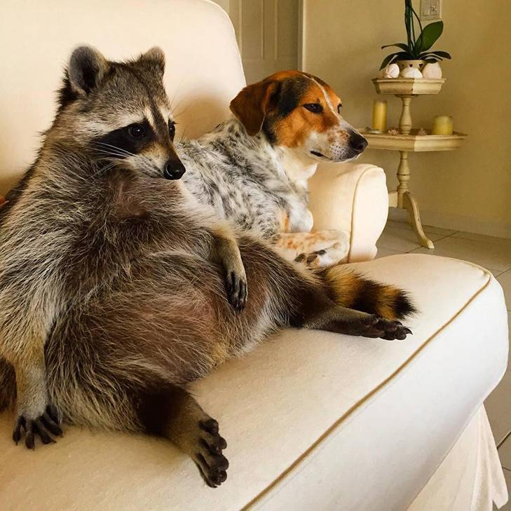 35 домашніх тварин, які вас здивують - фото 33