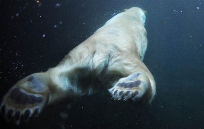 Як смішно і моторошно виглядають тварини з незвичного ракурсу - фото 4