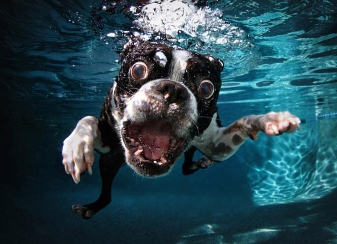 Як смішно і моторошно виглядають тварини з незвичного ракурсу - фото 7