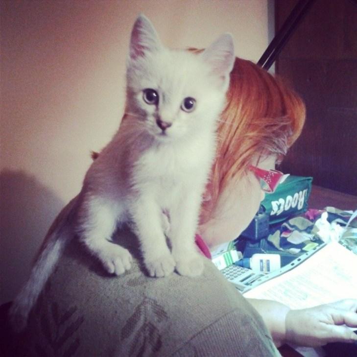 Чому коти, які мають закарпатських господарів, живуть, як у Бога за пазухою - фото 4