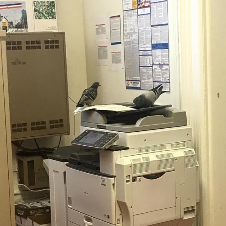 20 доказів того, що працювати в офісі - це весело! - фото 20