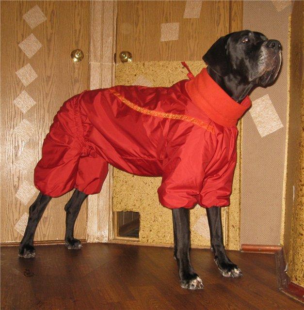 Холод собачий: ТОП-20 собак у зимовому одязі - фото 4