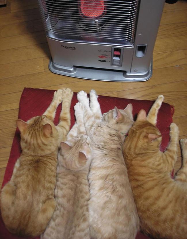 ТОП- 20 тварин, які марять весною і теплом - фото 1