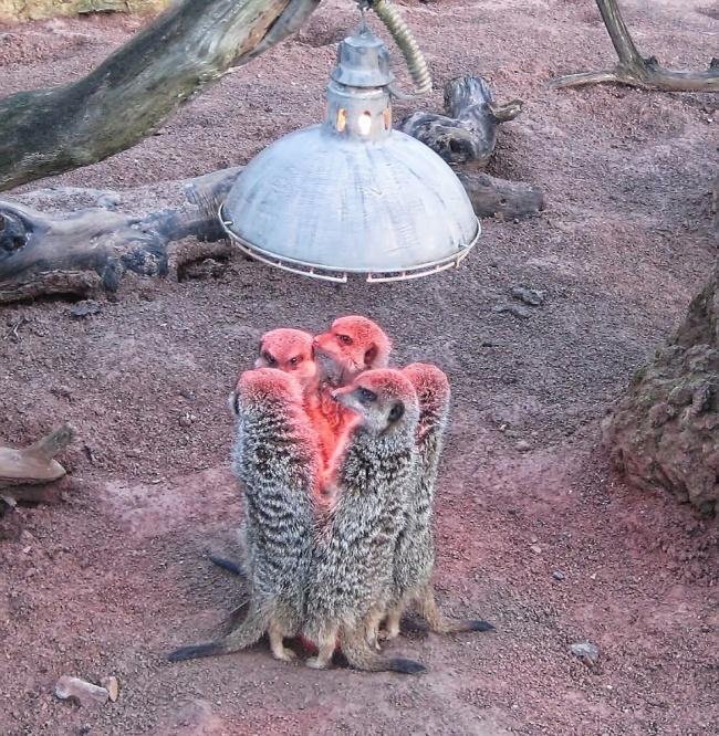 ТОП- 20 тварин, які марять весною і теплом - фото 6