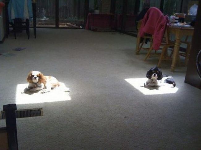 ТОП- 20 тварин, які марять весною і теплом - фото 9