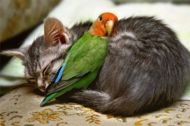 ТОП- 20 тварин, які марять весною і теплом - фото 13