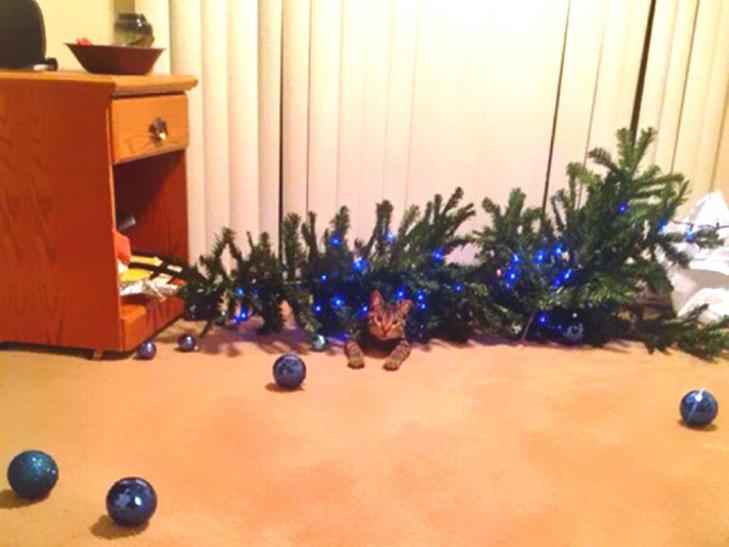 Пухнастики, які оголосили «війну» Новому року та Різдву - фото 8