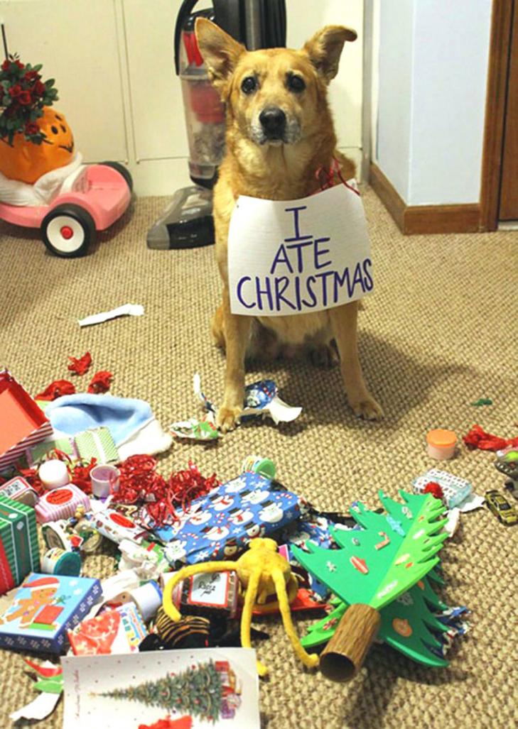 Пухнастики, які оголосили «війну» Новому року та Різдву - фото 11
