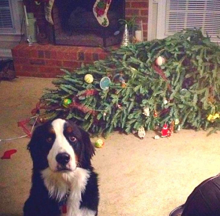 Пухнастики, які оголосили «війну» Новому року та Різдву - фото 5