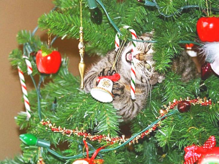 Пухнастики, які оголосили «війну» Новому року та Різдву - фото 7