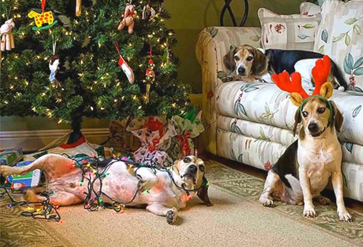 Пухнастики, які оголосили «війну» Новому року та Різдву - фото 6