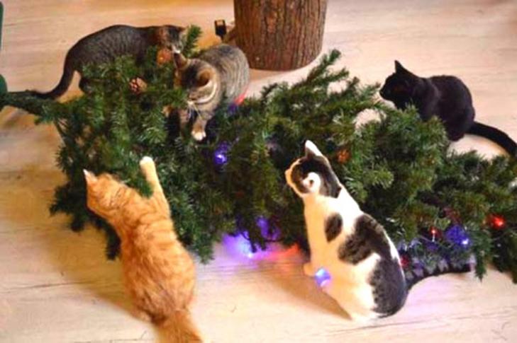 Пухнастики, які оголосили «війну» Новому року та Різдву - фото 4