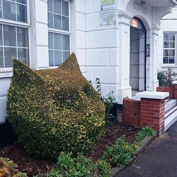 Британський художник увічнив свого кота... в кустах - фото 5