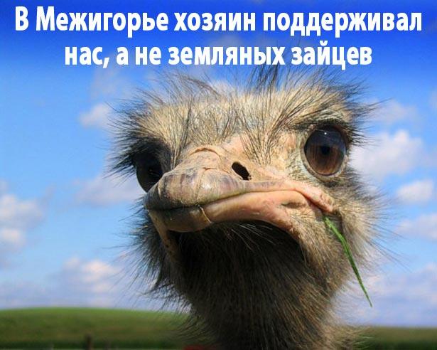 Як Янукович давав інтерв'ю ВВС (ФОТОЖАБИ) - фото 6