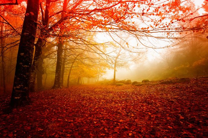 20 причин, за якими осінь набагато краще літа - фото 4