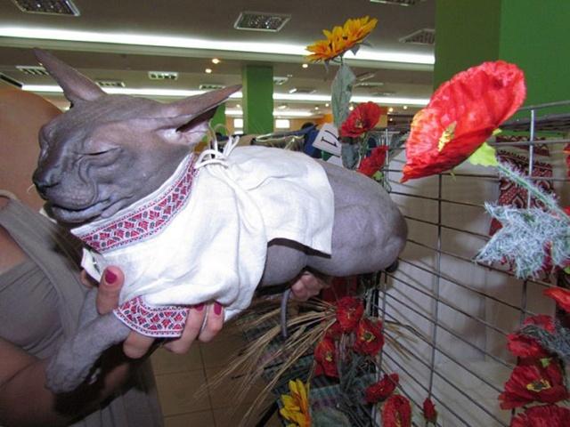Як проходить День вишиванки у котів - фото 3