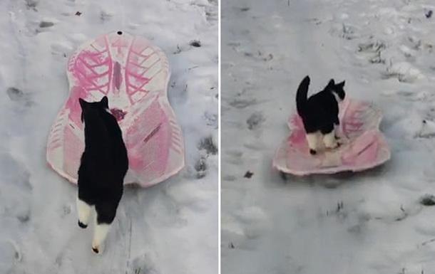 Кіт, який з вітерцем катається на санчатах, став зіркою соцмереж - фото 1