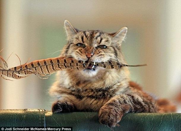 Як найстаріший у світі кіт став зіркою мережі - фото 1