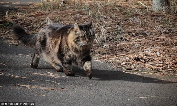 Як найстаріший у світі кіт став зіркою мережі - фото 3