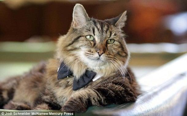 Як найстаріший у світі кіт став зіркою мережі - фото 4