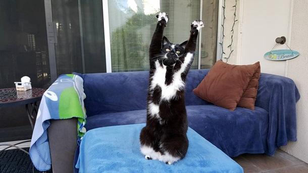 Кішка, яка здіймає лапи вгору, стала зіркою мережі - фото 3