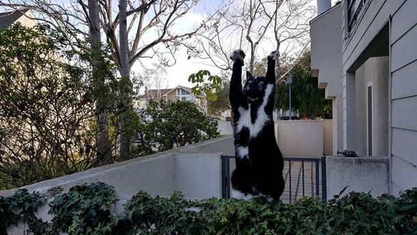Кішка, яка здіймає лапи вгору, стала зіркою мережі - фото 4