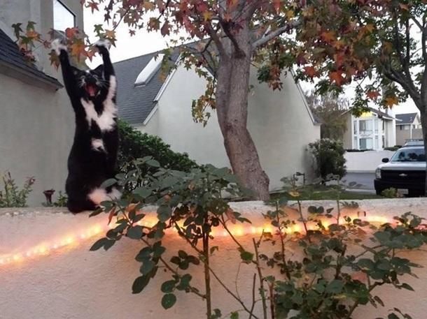 Кішка, яка здіймає лапи вгору, стала зіркою мережі - фото 5