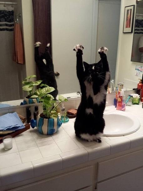 Кішка, яка здіймає лапи вгору, стала зіркою мережі - фото 6