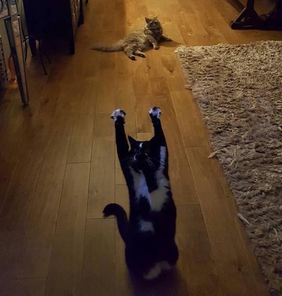 Кішка, яка здіймає лапи вгору, стала зіркою мережі - фото 7