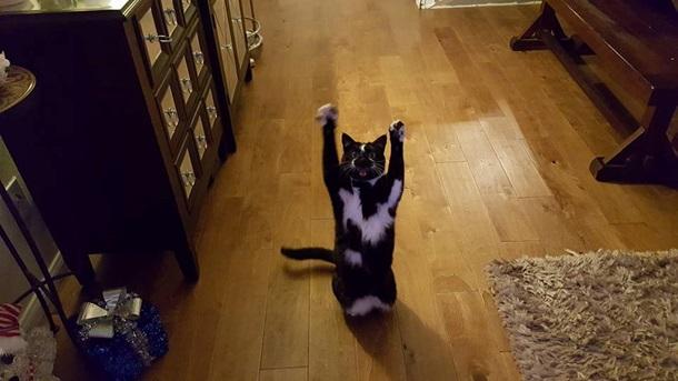 Кішка, яка здіймає лапи вгору, стала зіркою мережі - фото 8