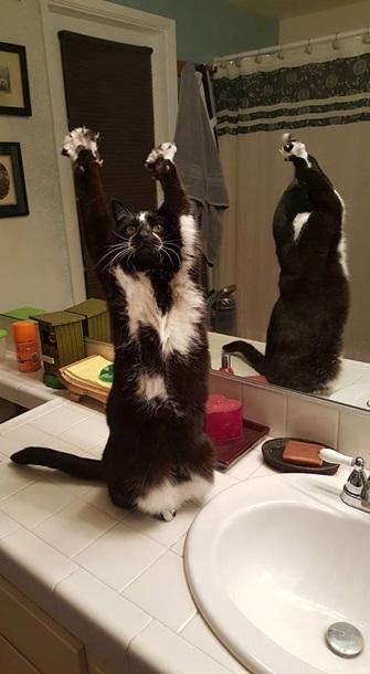Кішка, яка здіймає лапи вгору, стала зіркою мережі - фото 9