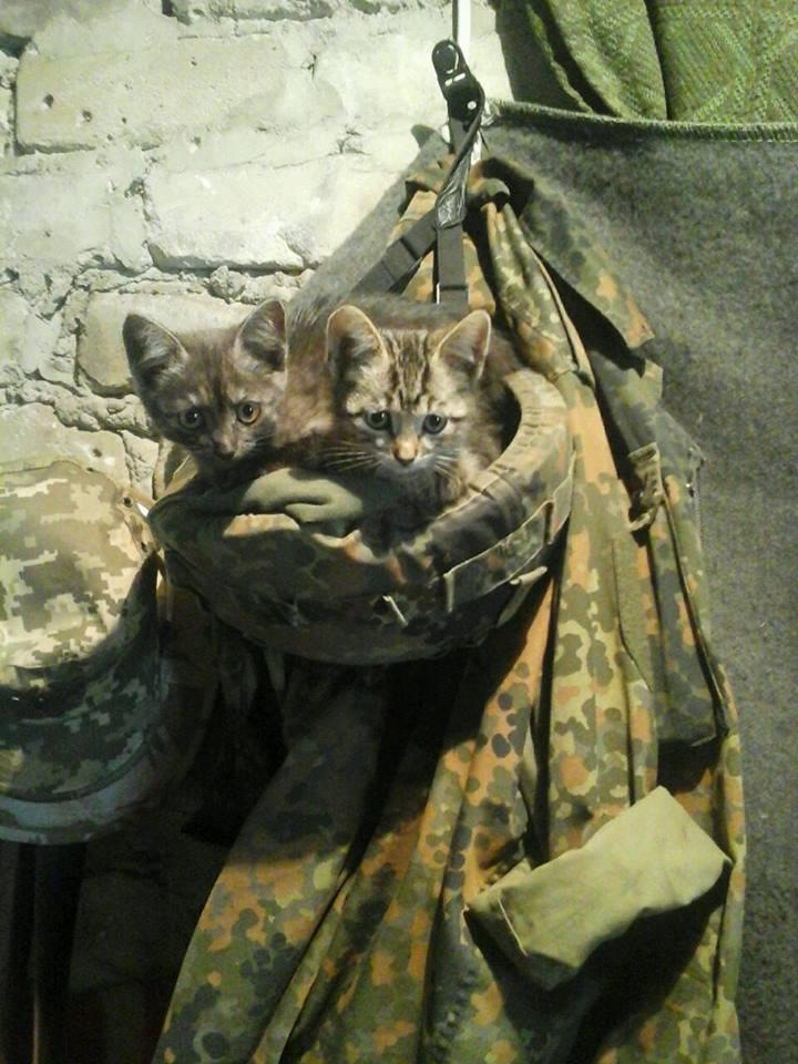 До Міжнародного дня котів: Як мурчики рятують Україну - фото 1